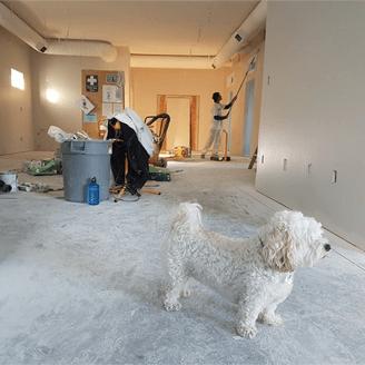 home renovation survival
